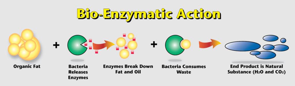 bio-enzymediagram3